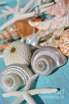 Collection of shells on turquoise tray http://fineartamerica.com/featured/shell-collection-carol-mcgunagle.html