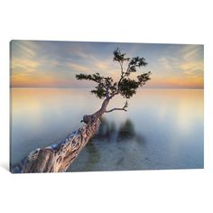 iCanvas Water Tree XIV by Moises Levy Canvas Print