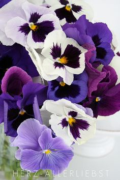 Stiefmütterchen Pansies remind me of my father. In his later years, he kept several wooden barrels full of them in asst colors. Amazing Flowers, My Flower, Fresh Flowers, Purple Flowers, Spring Flowers, Flower Power, Beautiful Flowers, Cactus Flower, Exotic Flowers
