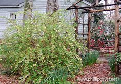 southern garden in winter - Google Search