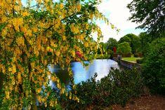Yellow Dunham | Allen Wilson - National Trust Wallpaper by cheadle photo  #Allen #cheadle #dunham National Trust Youtube Images, National Trust, Photo Location, Yellow, Wallpaper, Water, Outdoor, Instagram, Gripe Water