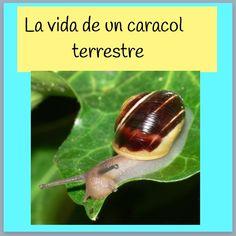 Reme Bayarri. Proyecto Infantil Caracoles.Portada book creator Caracoles