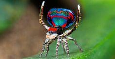 Топ-10 видов животных, открытых за последний год / Путешествия / Моя Планета