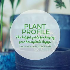 Do you really know how to take care of your houseplants? Introducing the PLANT PROFILE - a snapshot of the information you need to keep your houseplants happy. I'll be adding to the collection weekly. Is there a plant you want profiled? Let me know! Do You Really, Let It Be, Zebra Plant, Late Summer, Take Care Of Yourself, Houseplants, Indoor Plants, Profile, Happy