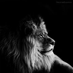 Awesome set of black and white animal portraits.