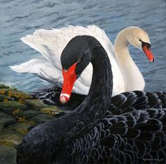 Black and White Swan Painting They're so gorgeous! Swan Love, Beautiful Swan, Beautiful Birds, Animals Beautiful, Cute Animals, The Black Swan, White Swan, Black And White, Black Swan Bird