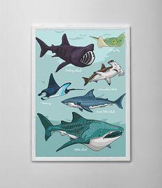 Shark Tank Illustration Print