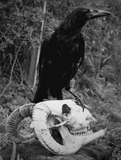 Raven and skull. Not funny, but very macabre. Cool