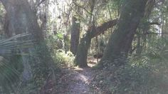 alligator alley florida | Alligator Alley Mountain Bike Trail in Gainesville, Florida ...