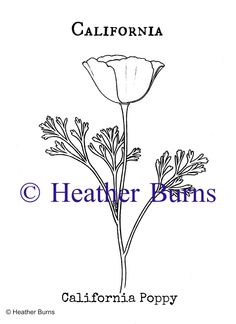 Usa state symbols on pinterest states flags coloring for California state flower coloring page