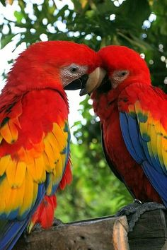 Eu amo pássaros