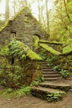 Stone House (aka Witches Castle) in the towering pine trees in Forest Park, near downtown Portland Oregon. Covered in green lichen, moss, and ferns. An abandoned structure from the early-1900's.