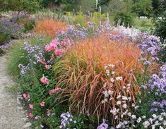 Biotope Design:Miscanthus sinensis 'Purpurascens' in Westpark in München Prairie Planting, Prairie Garden, Gravel Garden, Garden Landscaping, Landscape Design, Garden Design, Border Plants, Drought Tolerant Plants, Ornamental Grasses