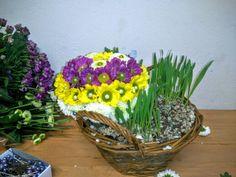 HOYA, s.o v Bratislava, Bratislavský kraj Bratislava, Four Square, Easter, Canning, Plants, Easter Activities, Plant, Home Canning, Planets