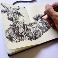 Gaia Alari. Quick studies I have been doing these days as preparation sketches for my next claymation! Dealing with animals and their proportions this time! #art #artist #drawing #sketch #practice #ink #moleskine #sketchbook #pen #ballpoint #ballpointpen #study #portrait ##realism #animal #nature #cows #graphic #illustration #blackandwhite #monochrome #marco