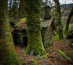 The Little Hermitage - thefierybiscuit: Stable Ruins, Ratgoed Forest Cottage, Witch Cottage, Forest Cabin, Witch House, Hatfield Forest, Small Cottages, Summer Kitchen, Dark Forest, Stables