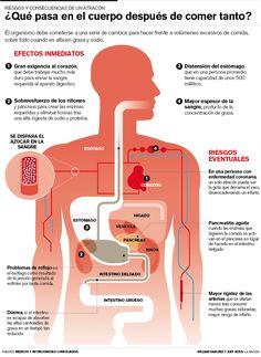 ¿Qué pasa en el organismo después de un atracón? - Investigación y Desarrollo