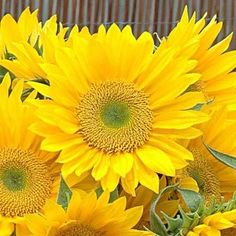 Autum Flowers, Sunflowers And Daisies, All Flowers, Beautiful Flowers, Belle Plante, Cut Flower Garden, Plantar, Types Of Plants, Mellow Yellow