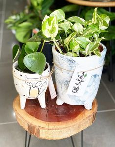 58 Best Indoor Plants To Purify The Air In Your Home These trendy Planters ideas would gain you amazing compliments. Check out our gallery for more ideas these are trendy this year. Best Indoor Plants, Hanging Plants, Gain, Compliments, Planter Pots, Gallery, Amazing, Check, Ideas