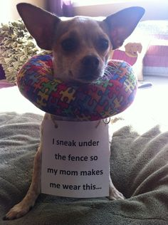 The best of dog shaming - Part 5 - Honestly I think this one is genius!