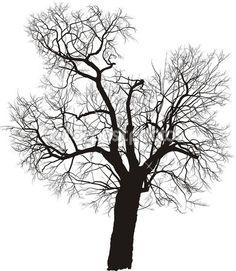vettore di albero di gelso — Illustrazione Stock #5663111