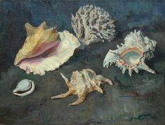 Shells and Coral by Joannes Franken