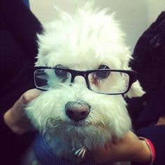 Nerd punk french poodle.#Repin By:Pinterest++ for iPad#