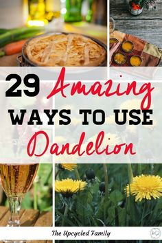Put those healthy little dandelions to good use with these 29 Amazing ways to use dandelion. With everything from Dandelion recipes for wine to healing salve! #dandelion #greens #benefitsof #homeremedies #food #salad #tea #wine #cooking #recipes #dandelionrecipes Bee Food, Dandelion Jelly, Dandelion Recipes, Wild Edibles, Greens Recipe, Grow Your Own Food, Edible Garden, Edible Flowers, Healthy Dinner Recipes
