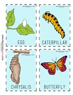 Butterfly Life Cycle Sequencing Cards This is a colorful set of sequencing cards for  children learning about the life cycle of a  butterfly.  These are great for center time  activities, or for take home cards.