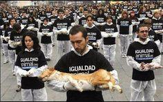 www.igualdadanimal.org