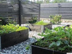 puutarha,piha,kasvimaa,kasvilava