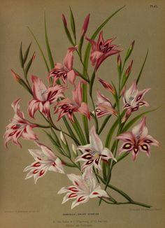 Album van Eeden : - Biodiversity Heritage Library