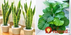 12 rastlín, ktoré prežijú aj v najtmavšom kúte vášho bytu