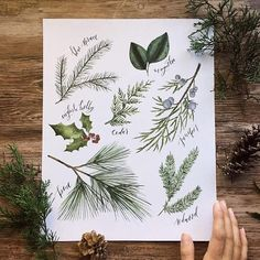 Holiday wall decor, Seasonal decor, Christmas wall decor art print, Botanical christmas  Seasonal foliage, painted in a realistic style with watercolor and carefully arranged and titled painted using watercolor by Rose Henges. The perfect piece to display throughout the entire winter season. Types of tree foliage include: Pine, Juniper, Cedar, English Holly, Redwood, Blue