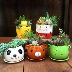 Animal containers are irresistible. Check out Daiso. If they still have them, each costs $1.50. #succubabies #succulentbabies #succulentlove #succulove #succufest #succulents #succulentcontainer #succulentgarden #succulents #succulentlove #succulentcollection #succulenthoarder #succulentlove #succulents_only #succulentaddict