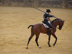 bay lusitano being ridden in traditional doma vaquera gear