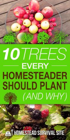 10 Trees Every Homesteader Should Plant (And Why). Most homesteads are surrounded by an abundance of trees growing in the wild. This is great for firewood and shade, but selectively planting certain trees can offer other benefits. #Homesteadsurvivalsite #Treestoplant #Gardeningonhomestead