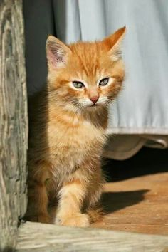 (^_^) Happiness is owning a ginger cat with an attitude.
