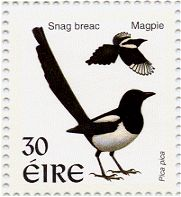 homepage.tinet.ie ~edrice birds images magpie2.gif
