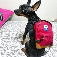 Backpack …