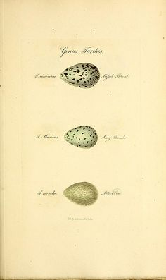eggs n238_w1150 | by BioDivLibrary