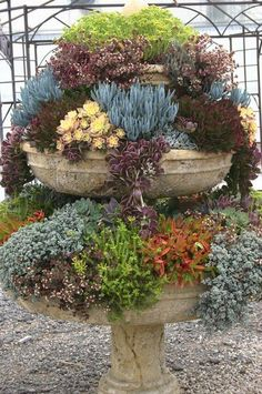 Fairy Garden Ideas Creative backyard garden design how to make. Succulents In Containers, Cacti And Succulents, Planting Succulents, Planting Flowers, Container Flowers, Container Plants, Dream Garden, Garden Art, Garden Plants