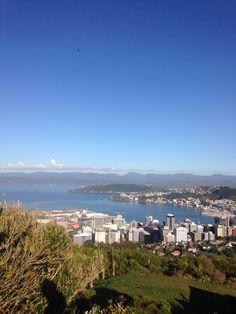 Wellington, Northland Blaze Spot, New Zealand