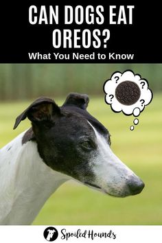 Can dogs eat Oreos? Keep your dog safe and find out what you need to know about dogs eating Oreo cookies and ice cream. #dogsafety #doghealth #dogs #doglovers #doginformation #dogownertips #pethealth #oreos #oreoicecream Dog Cookies, Oreo Cookies, Can Dogs Eat Lemons, Can Dogs Eat Pumpkin, Can Dogs Eat Strawberries, Dog Nutrition, Dog Information, What Dogs, Dog Safety