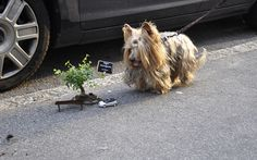 Doggonit, how'd he make that tiny Pothole garden?