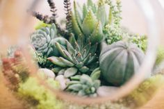 Succulents Forever !