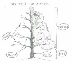 How to draw a realistic tree... This could be useful in our gardening journals.
