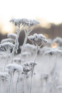 """ frosted meadow ginasbilder "" in 2020"