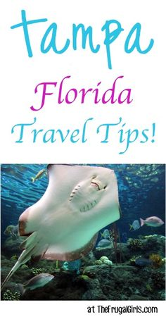 Tampa, Florida Insider Travel Tips! ~ at TheFrugalGirls.com ~ must see places to go, restaurants to try, and things to do on your next vacation!