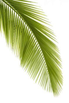 Palm leaf Pixerstick Sticker - Wall decals